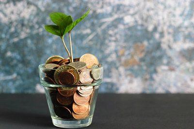 Plant growing in pot of money
